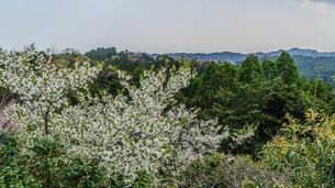 春の大多喜県民の森の展望台から見た風景の写真素材 [FYI01240469]