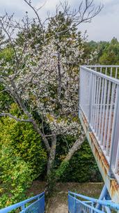 春の大多喜県民の森の展望台から見た風景の写真素材 [FYI01240471]