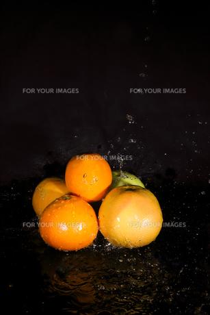 オレンジとグレープフルーツと水飛沫の写真素材 [FYI01240574]