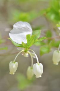 桜の花びらの写真素材 [FYI01240688]