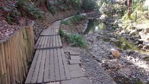 等々力渓谷(東京都世田谷区) 歩道2の写真素材 [FYI01240789]