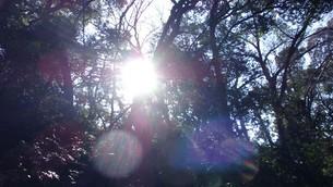 等々力渓谷(東京都世田谷区) 日光の写真素材 [FYI01240791]