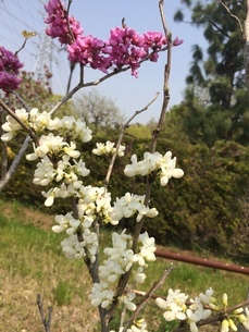 4月の植物の写真素材 [FYI01240816]