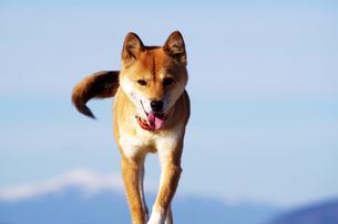 青空と犬の写真素材 [FYI01240962]