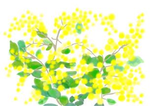 ミモザの花のイラスト素材 [FYI01241104]