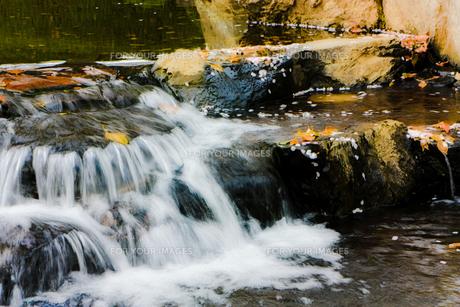 桜の花びらが浮かぶ小川の流れの写真素材 [FYI01241391]