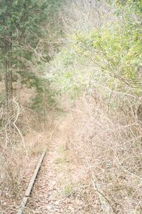 森の中に残された使われていない線路の写真素材 [FYI01241415]
