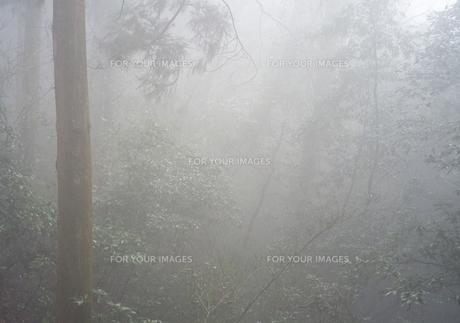 霧に包まれた森の写真素材 [FYI01241420]
