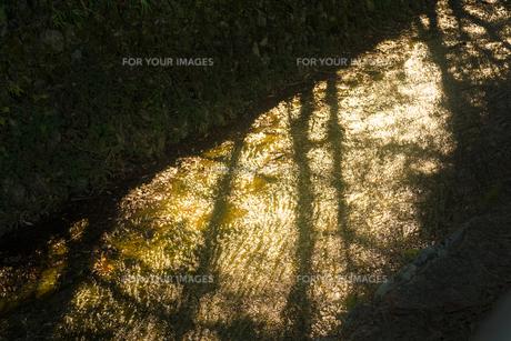 川の水面が夕陽によって黄金色に輝いているの写真素材 [FYI01241430]