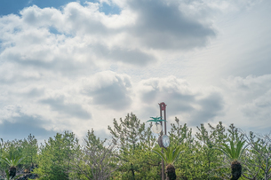 桜島の南国っぽい植物に囲まれた1時25分を指す時計と青空、それと雲の写真素材 [FYI01241438]