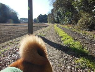 田舎道の写真素材 [FYI01241592]