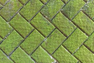 ブロック塀の壁面のコケ 背景用イメージ の写真素材 [FYI01241676]