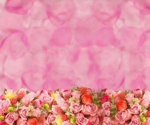 花の写真素材 [FYI01241743]