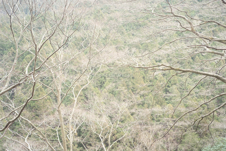 山が木々に覆われているの写真素材 [FYI01241842]