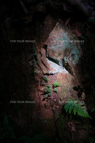 木の幹が木漏れ日に照らされているの写真素材 [FYI01241843]