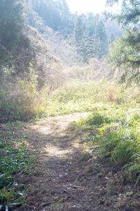 森の奥に原っぱがあるの写真素材 [FYI01241849]