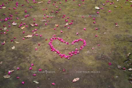 ツバキの花びらがハートの形に並べられているの写真素材 [FYI01241853]