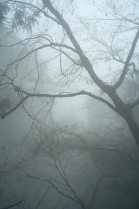 木々が霧に包まれているの写真素材 [FYI01241858]
