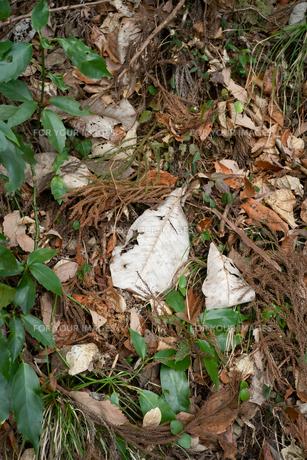 山の中で落ち葉が枯れているの写真素材 [FYI01241863]