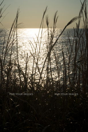伊豆大島の海とススキの写真素材 [FYI01241866]