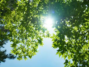 緑の透過光の写真素材 [FYI01241908]