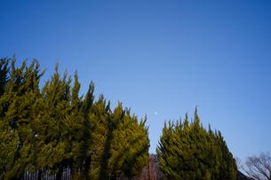 満月に近い状態の月が青空に浮かんでいるの写真素材 [FYI01241917]