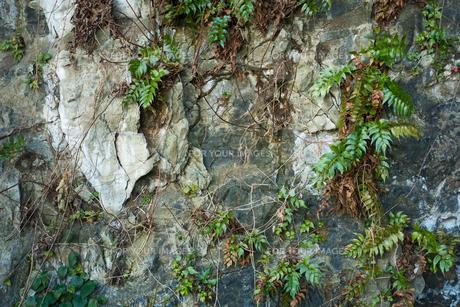 海岸付近の岩の表面の写真素材 [FYI01241939]