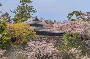 春の松江城の風景の写真素材 [FYI01241957]