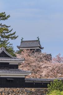 春の松江城の風景の写真素材 [FYI01241958]