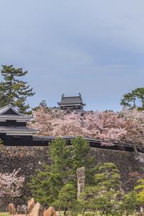 春の松江城の風景の写真素材 [FYI01241960]