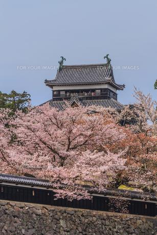 春の松江城の風景の写真素材 [FYI01241961]