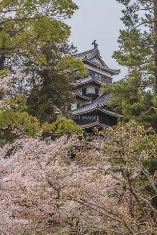 春の松江城の風景の写真素材 [FYI01241962]