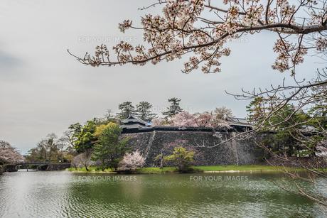 春の松江城の風景の写真素材 [FYI01241964]