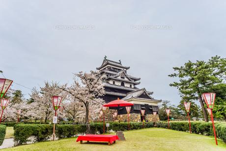 春の松江城の風景の写真素材 [FYI01241965]
