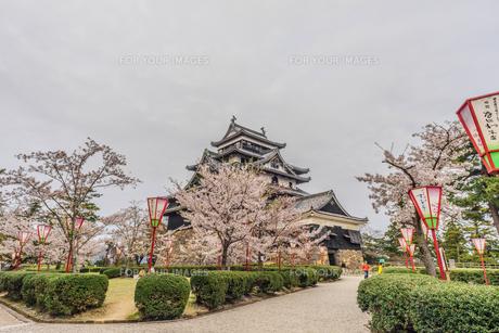 春の松江城の風景の写真素材 [FYI01241966]
