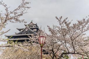 春の松江城の風景の写真素材 [FYI01241967]