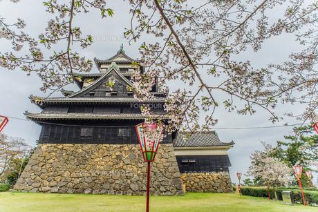 春の松江城の風景の写真素材 [FYI01241969]