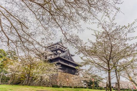 春の松江城の風景の写真素材 [FYI01241970]