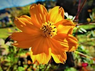秋の花の写真素材 [FYI01241987]