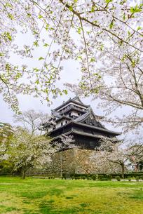 春の松江城の風景の写真素材 [FYI01242058]