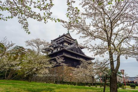 春の松江城の風景の写真素材 [FYI01242059]
