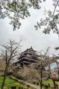 春の松江城の風景の写真素材 [FYI01242061]