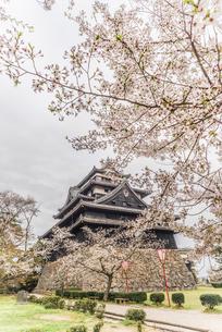 春の松江城の風景の写真素材 [FYI01242062]