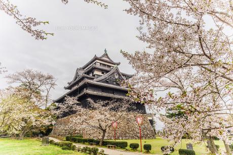 春の松江城の風景の写真素材 [FYI01242063]