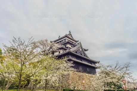 春の松江城の風景の写真素材 [FYI01242064]