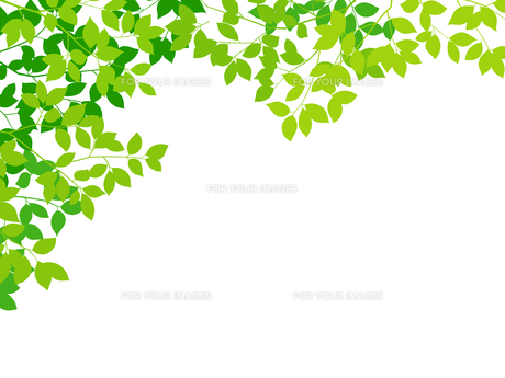 新緑イメージ 背景素材のイラスト素材 [FYI01242073]