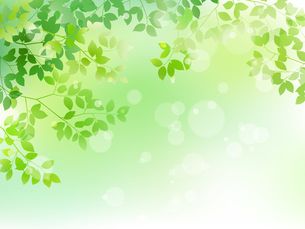 新緑と木漏れ日イメージ 背景素材のイラスト素材 [FYI01242075]