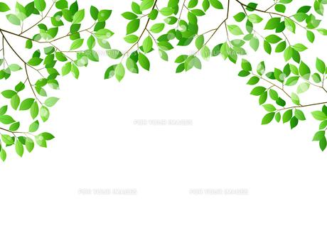 新緑と木漏れ日イメージ 背景素材のイラスト素材 [FYI01242076]