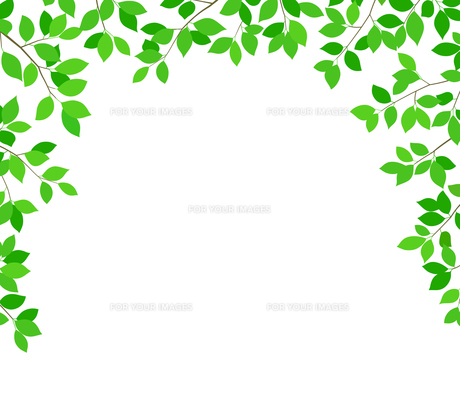 新緑イメージ 背景素材のイラスト素材 [FYI01242077]