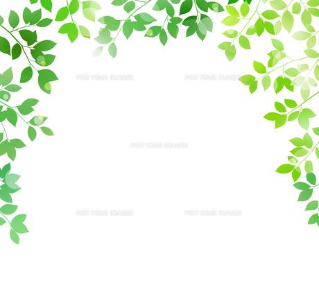 新緑と木漏れ日イメージ 背景素材のイラスト素材 [FYI01242078]